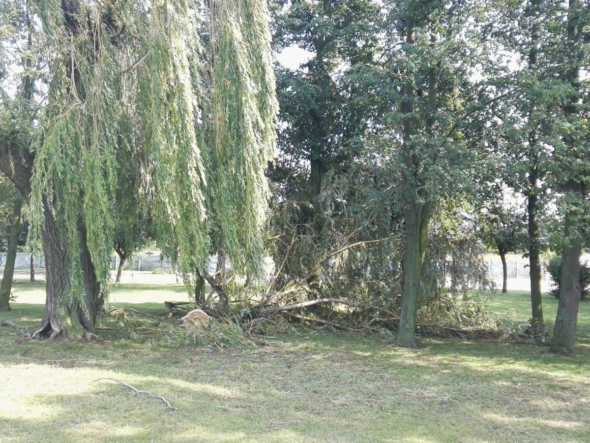 Połamane drzewa po nawałnicy w Śremie